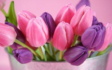 букет, тюльпаны, cvety, rozovyj, fioletovyj, tyulpany, butony, ведерко