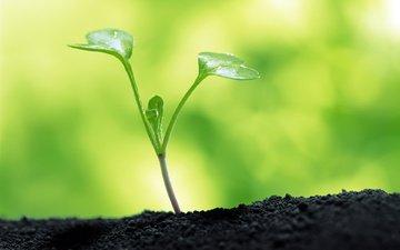 земля, зелень, макро, цветок, росток, cvetok, makro, zemlya, zelenyj, rostok