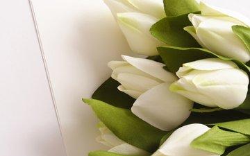 cvety, belye, listya, tyulpany, buket, zelenye