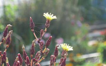 цветы, колючки, полевые
