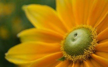 cvety, makro fotografii, oboi dlya rabochego
