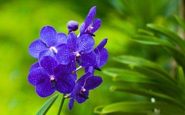 cvety, zelen, orxidei, rastenie