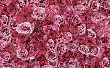 cvety, krasivo, rasteniya