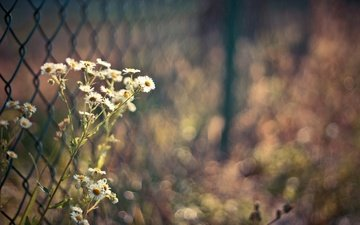 cvety, makro, rasteniya, foto, osen, travy