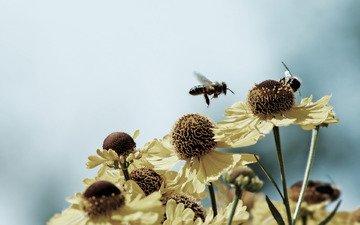 cvety, makro, rasteniya, priroda, foto, naseko, леспестки