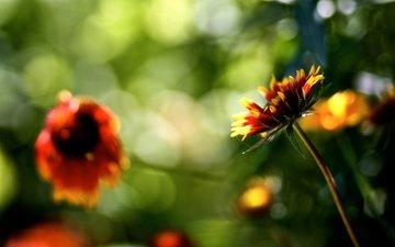 cvety, rasteniya, priroda, bliki, boke