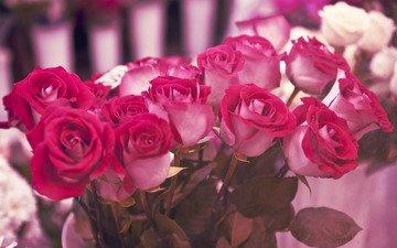 cvety, rozy, podarok