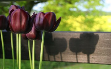 cvety, vesna, tyulpany, priroda, stebli, svet