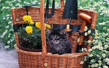 цветы, кошка, котенок, пушистый, черный, малыш, полевые, цветочки, корзинка, садовый инвентарь