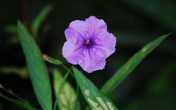 цветы, трава, листья, тени, zelen, color purple, listva