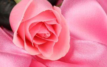 роса, rozovyj, cvetok, kapli, roza