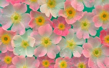 fon, cvety, cveta