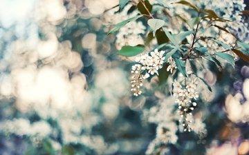 cvety, listya, priroda, boke, леспестки