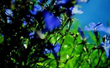 cvety, makro, rasteniya, priroda, fokus