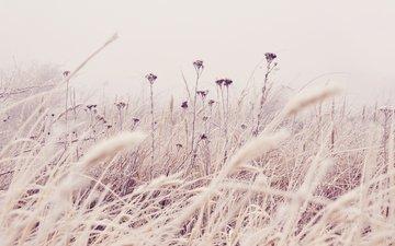 полюс, cvety, trava, rasteniya, priroda, stebli, nezhnye