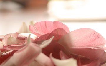 cvety, rozovye, svet, леспестки