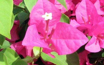 cvety, krasota, tajland