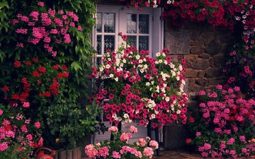 cvety, zelen, stena, dom, dver