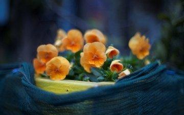 cvety, makro, cvetenie, rasteniya, foto, anyut, леспестки
