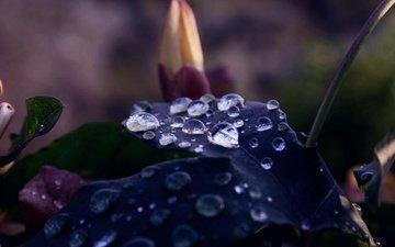 makro, rasteniya, priroda, cvet, foto, listik