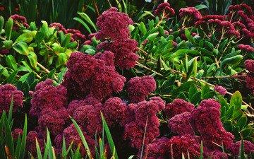 cvety, listya, zelen, kust, yarko