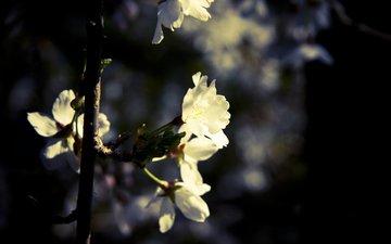 cvetok, makro, listya, vetka, rastenie, semka