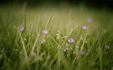 cvety, trava, makro, rasteniya, zelen, priroda, foto, pol