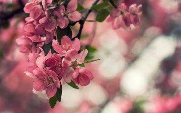 cvety, makro, listya, priroda, rastenie, boke, леспестки