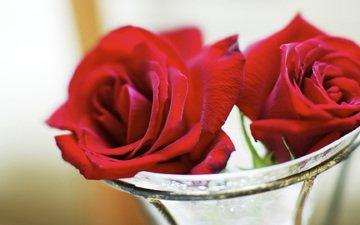 butony, rozy, vaza