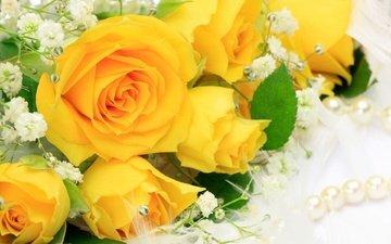 cvety, zheltye, rozy