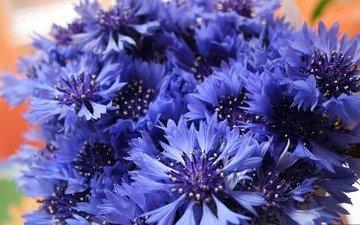 vasilki, buketik, polevye cvety