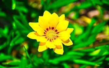 zheltyj cvetok, na fone, zelenoj travy