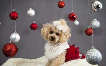 новый год, украшения, собака, шарики, щенок, праздник, пудель