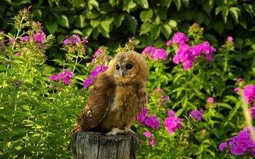 цветы, трава, сова, лето, хищник, птица, пенек