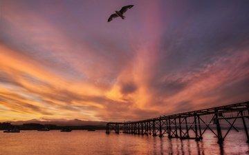 закат, море, мост, чайка, птица, новая зеландия, гавань, novaya zelandiya