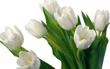 cvety, tyulpany, belyj, buket