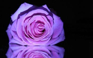 макро, цветок, роза, бутон, черный фон, сиреневая роза