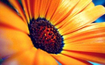 cvetok, yarkie, rastenie, cveta, леспестки