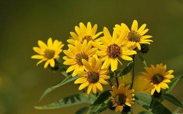 flowers, greens, blur, bouquet, stems, yellow, cvety, krasota, leto, cvet