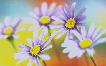 cvety, krasivo, cveta