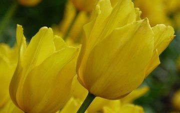cvety, leto, краснодар