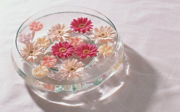 cvety, belye, rozovye, voda, krasnye, gerbery, vaza