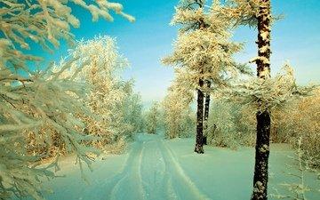 небо, дорога, снег, дерево, лес, зима, иней, заснеженные деревья
