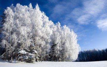 небо, облака, снег, лес, зима, мороз, иней, сосны, ели, сугробы, зимний лес