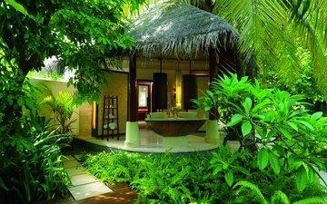 зелень, пальмы, бунгало, тропики, джунгли, отель, шри-ланка