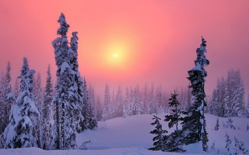 the sun, snow, forest, sunset, winter, fog, frost, pine, ate, haze, the snow