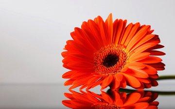 cvetok, krasivyj