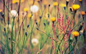 fon, cvety, polyana, leto, rasteniya, priroda, travy, obo