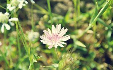 трава, природа, цветок, поле, лето, полюс, cvety, trava, listochki