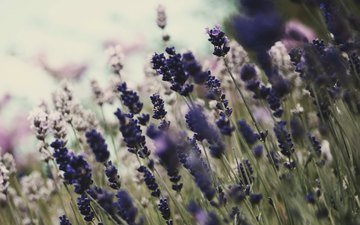 fon, cvety, oboi, cvetenie, rasteniya, priroda
